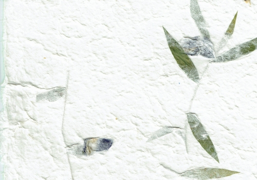 Irisblume