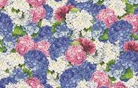 Ortensie Rosa Blu